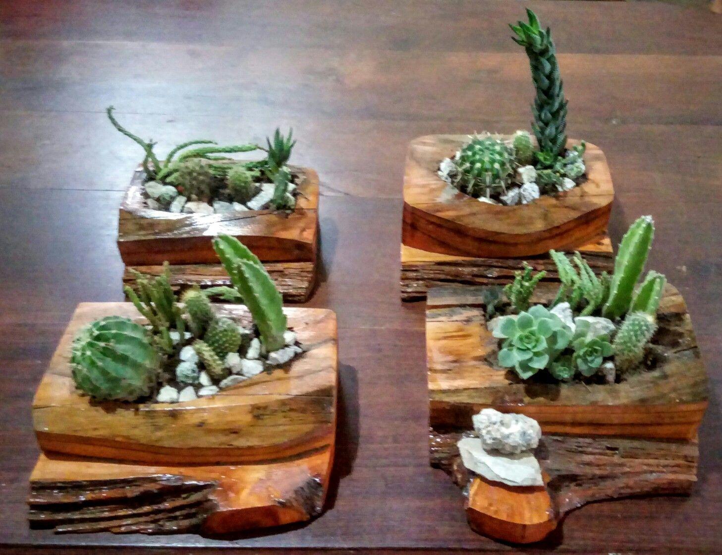 Maceteros de troncos para cactus y suculentas trabajos - Maceteros de madera ...