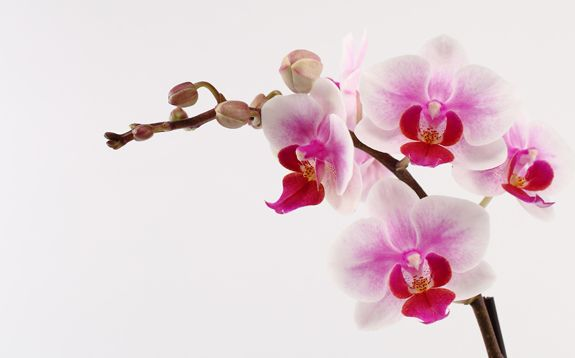 Diy Orchid Inspiration White Orchids Orchids Orchid Photo