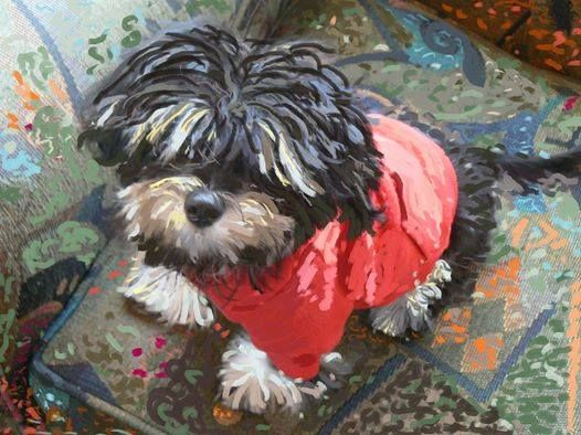 This Is My Havanese Maddie I Can Paint Your Pet For As Little As 35 00 Please Contact Me At Www Facebook Com Suzi Paint Your Pet Dog Paintings Pet Portraits