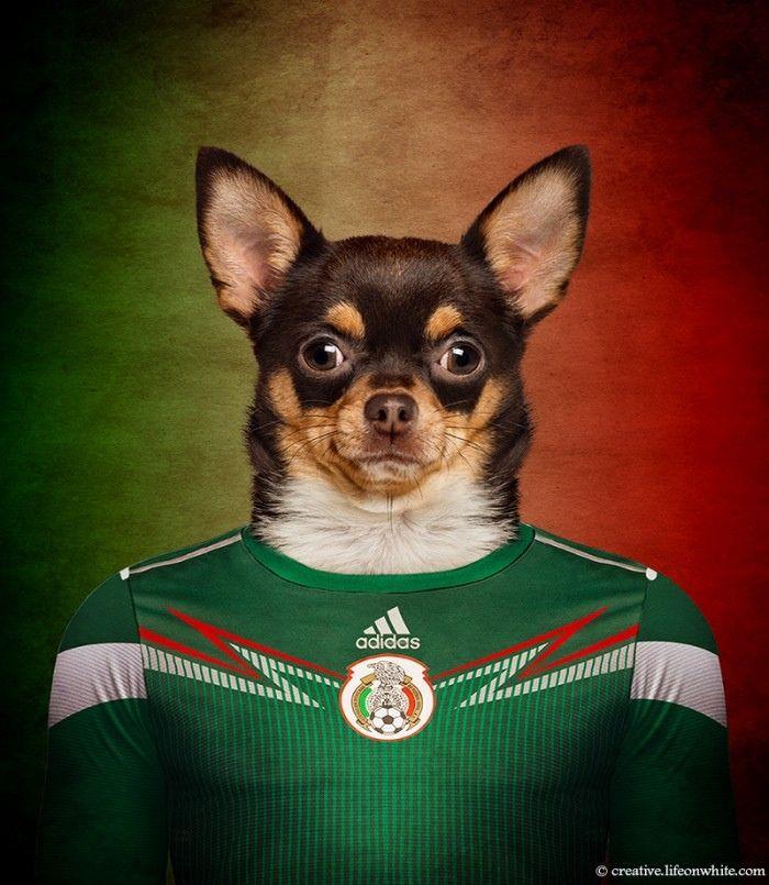 #VetsMexico
