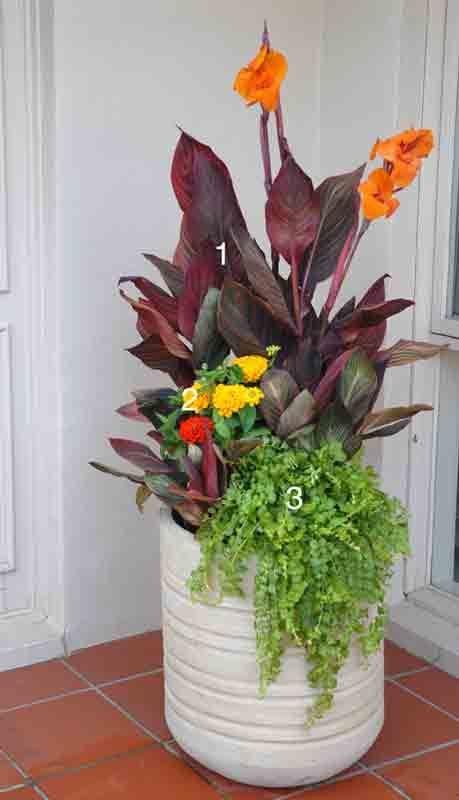 Plants Include Thriller Tropicanna Cannas Original