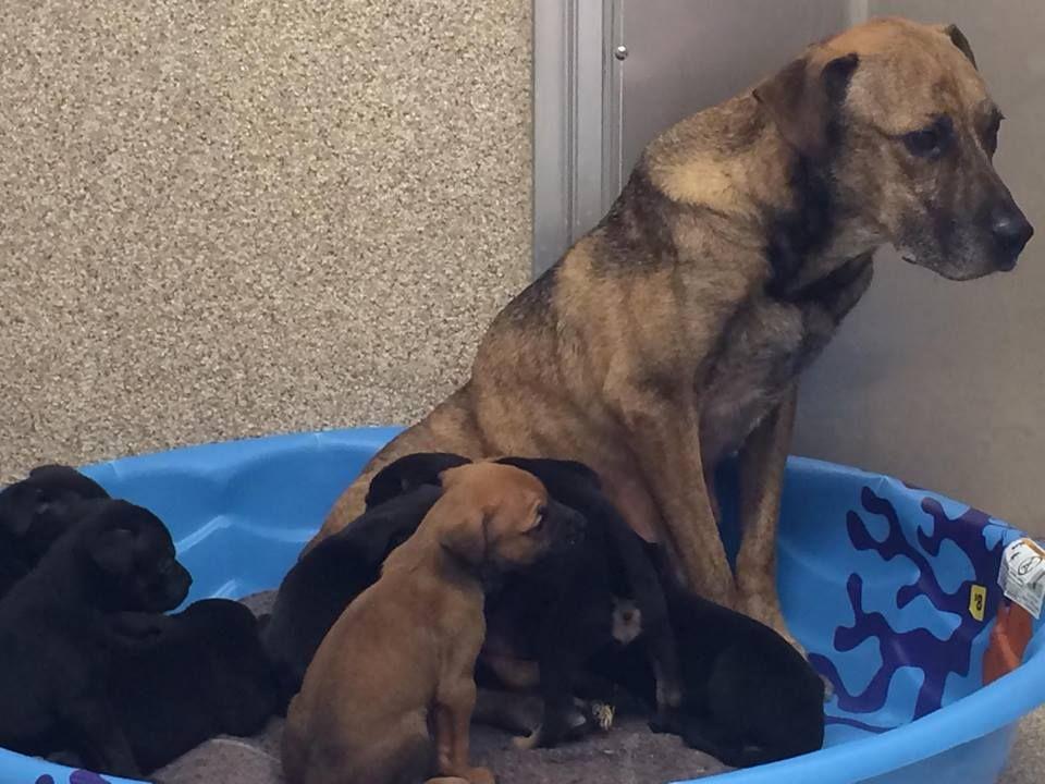Macon bidd co animal control urgent mama and