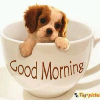 Always A Good Morning With A Cavalier Cute Animals Pinterest