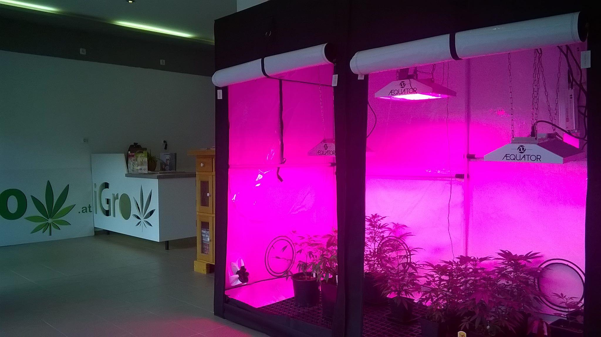 Www Igrow At Stecklinge Growshop Wien Linz Hanf Led Pflanzenlampe Gewachshaus Gartenbau