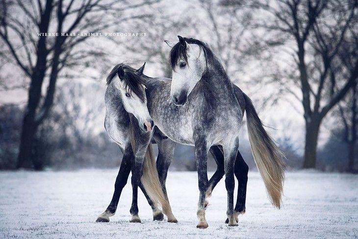 ¿Crees que existe un animal más noble y elegante que el caballos? La fotógrafa Wiebke Haas nos muestra en 21 imágenes toda la fuerza y nobleza de los caballos salvajes. ¿Quieres ser testigo de su galope mágico?