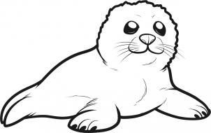 How To Draw A Seal Pup Seal Pup Step 6 Lion Coloring Pages Zoo Animal Coloring Pages Artic Animals