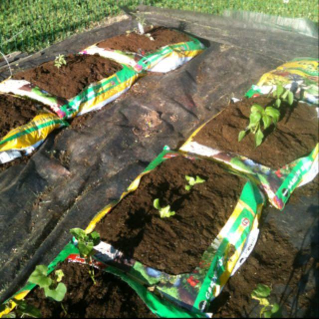 Soil Bag Gardening Flower Garden Backyard Living 400 x 300