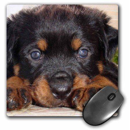3drose Dog Rottweiler Puppy Mouse Pad 8 By 8 Inches In 2019