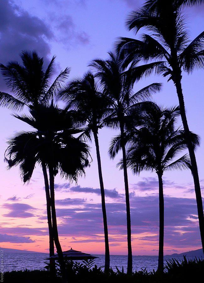 Sunset On The Palms Maui Hawaii Palm Trees Wallpaper Palm Tree Sunset Tree Wallpaper