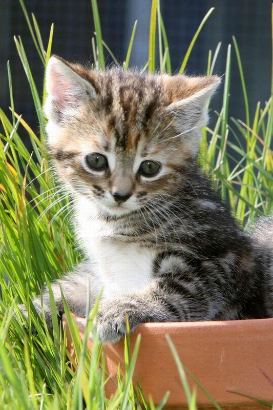 un petit chaton trop mignon