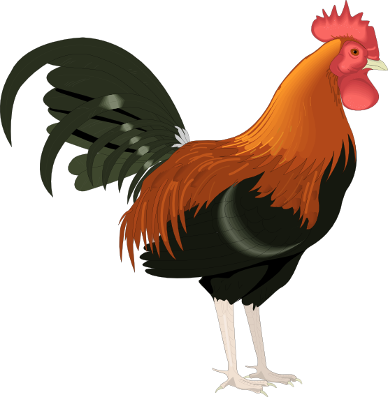 rooster clip art cartoon free clipart images 2 sew you can rh pinterest com rooster clip art free images rooster clip art black and white