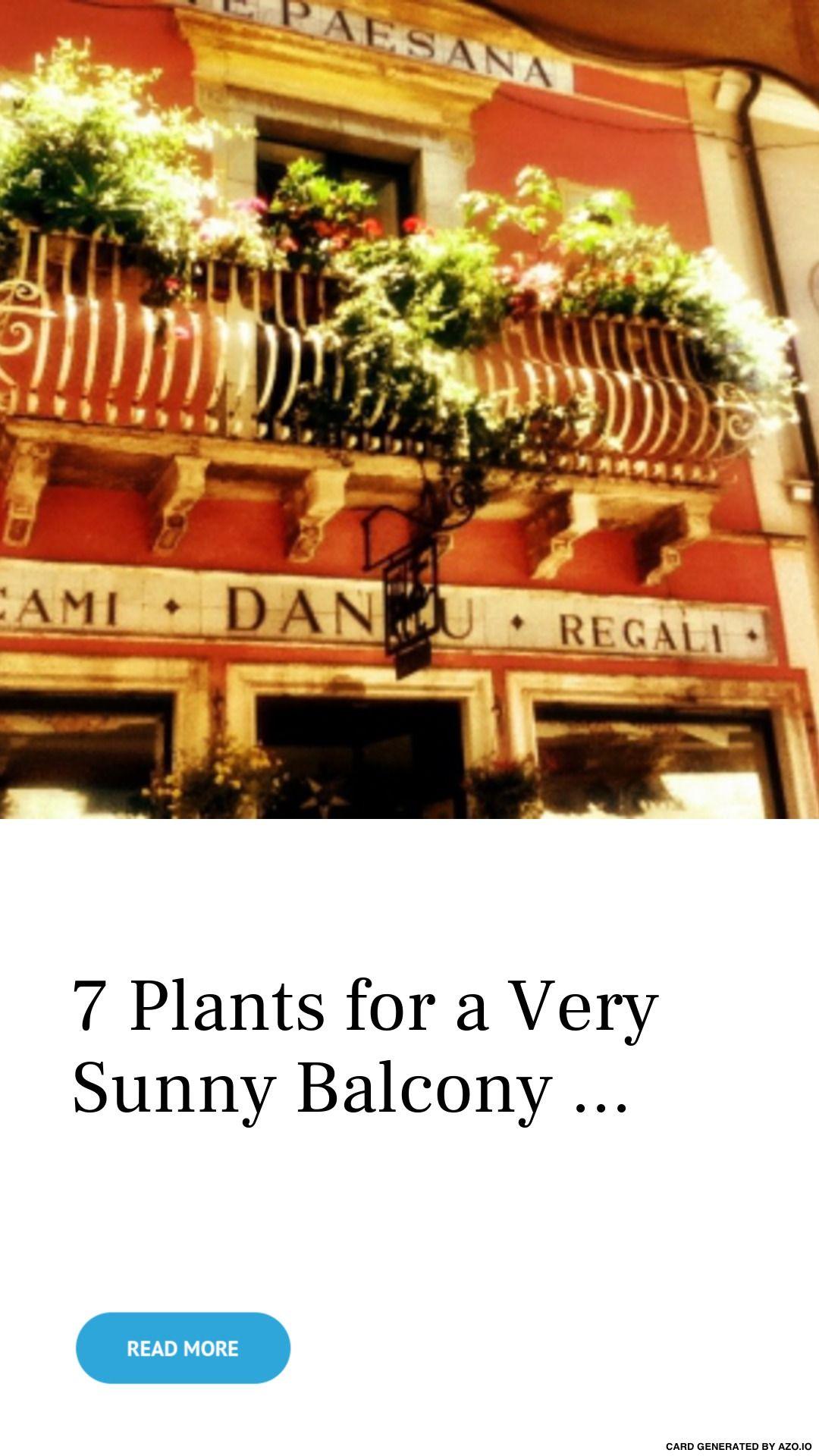 7 Plants for a Very Sunny Balcony ... -   10 planting Balcony sunny ideas