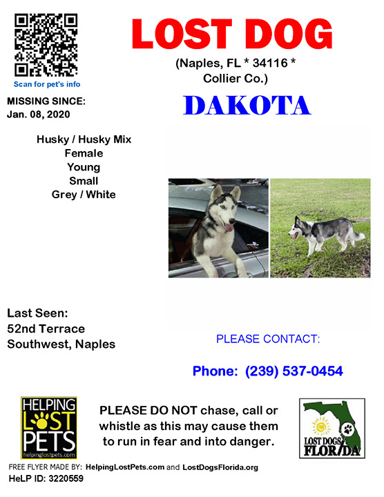 Pin By Lost Dogs Florida On Lost Dogs Losing A Dog Losing A Pet