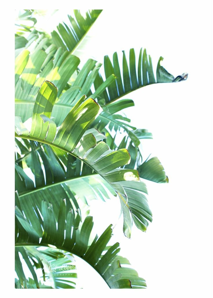 Green Leaf Png Clipart Tropical Leaves Transparent Background Transparent Png Download 800x120 In 2020 Plant Painting Tropical Leaves Leaf Art