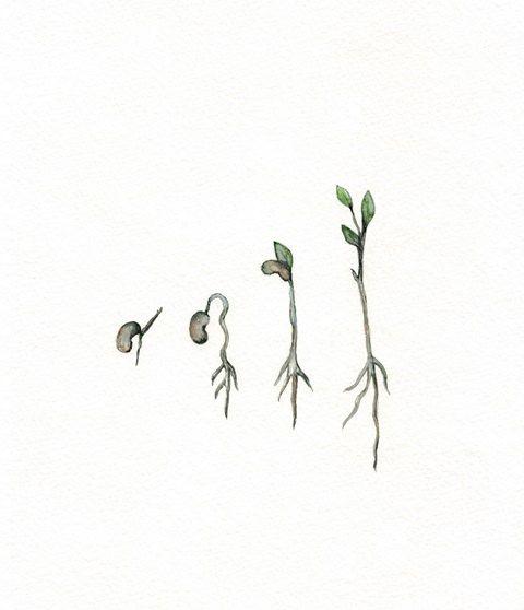 Spring Seedling / Seed / Green / Brown / Archival by kellybermudez