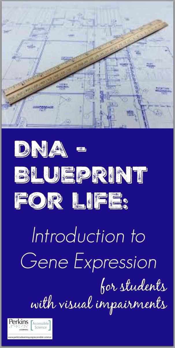 DNA - Blueprint for Life Intro to Gene Expression Gene expression - new blueprint gene expression