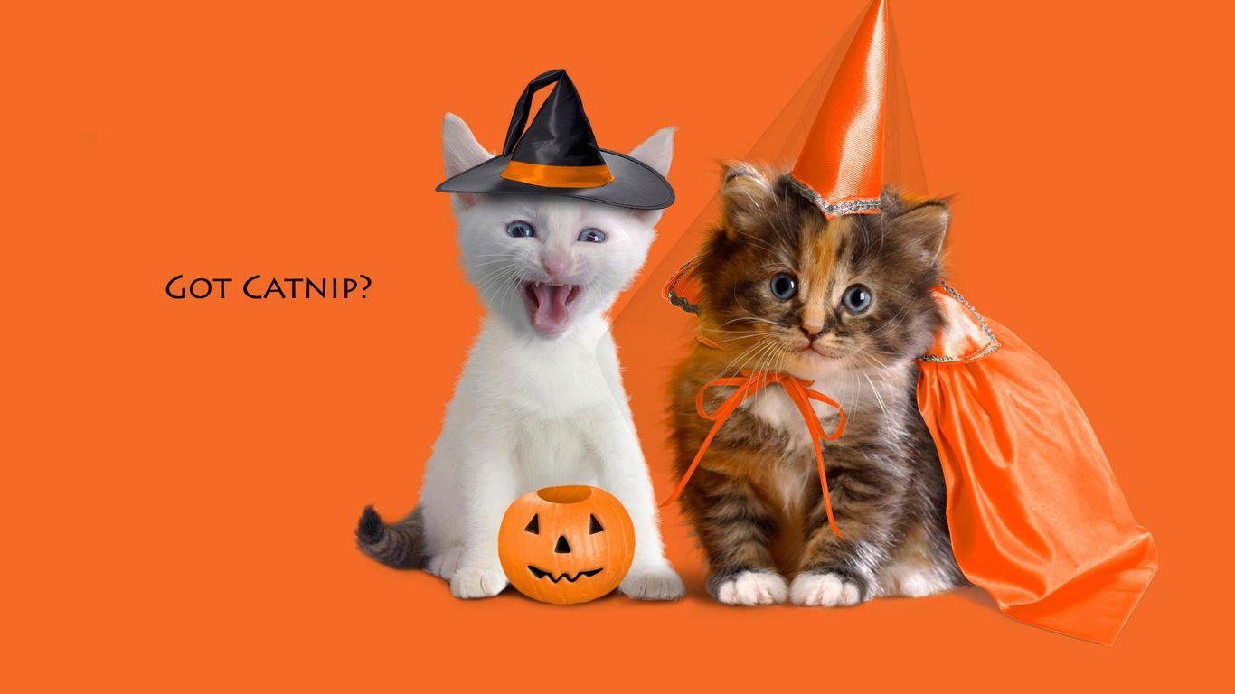 Cat Funny Cats Halloween