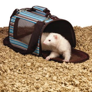 All Living Things Small Animal Carrier Pet Ferret Small Pets