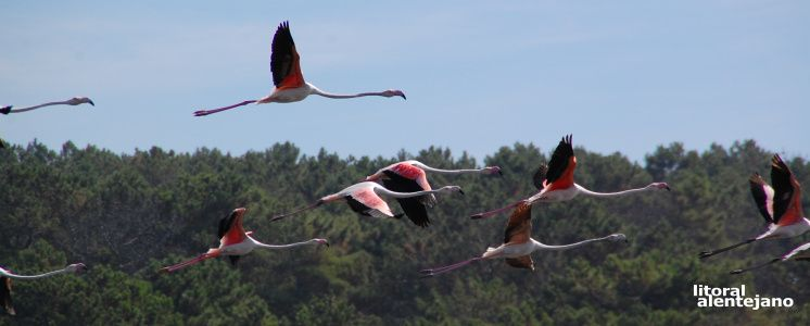Lagoa de Santo André - Portal do Litoral Alentejano Cultura e Turismo