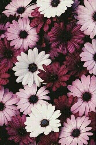 Imagem De Flowers Purple And Wallpaper Flower Wallpaper