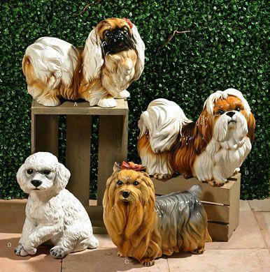 Pekingese Shih Tzu Yorkshire Terrier White Poodle Pekingese