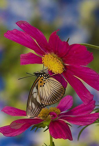 Rainbow Fields Of Flowers Beautiful Butterflies Beautiful Nature Flowers