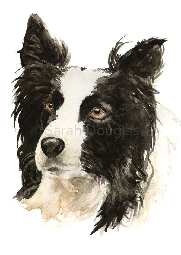 Border collie pet portrait in watercolour by Sarah Douglas