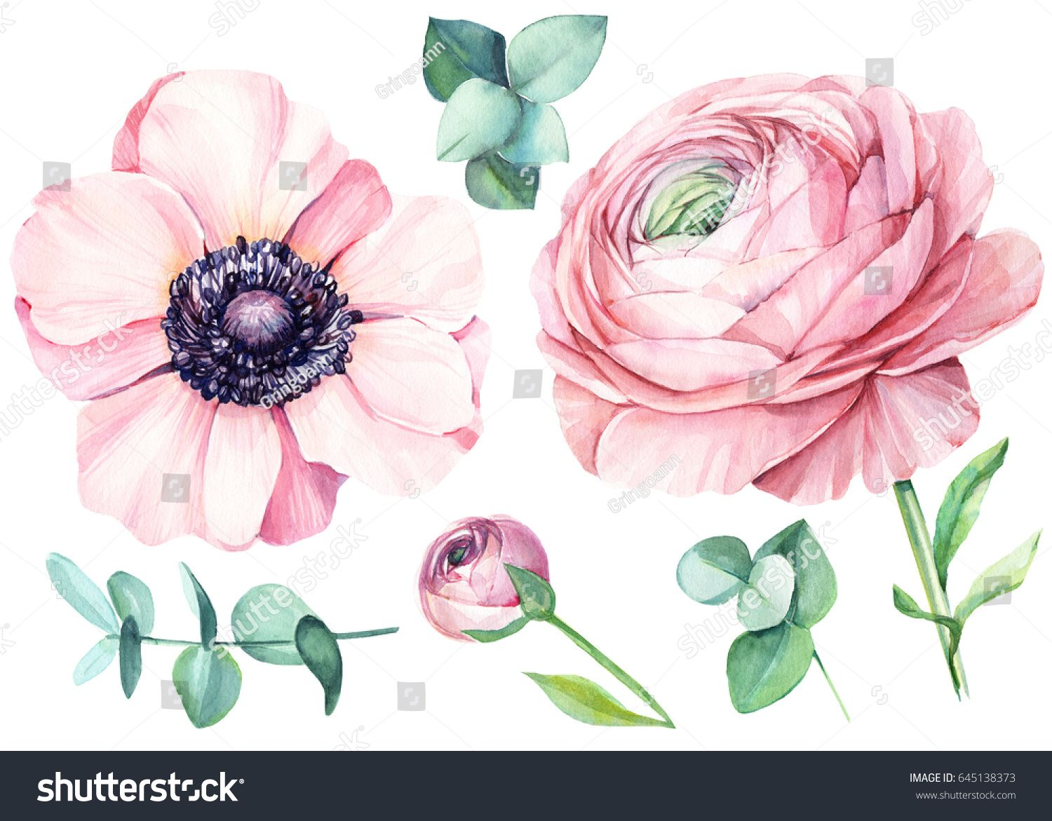 Ranunculus and eucalyptus anemone floral isolated elements for floral isolated elements for wedding invitation greeting cards watercolour buy this stock illustration on shutterstock find other images kristyandbryce Images