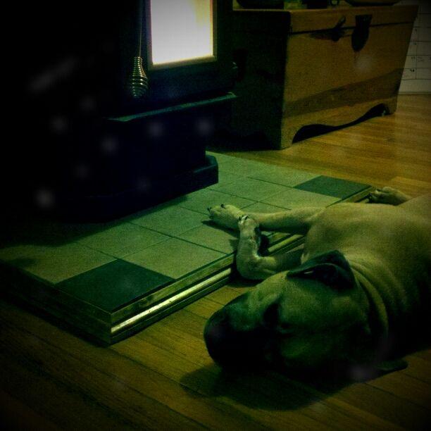 He loves the pellet stove....