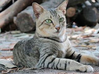 Cara Merawat Kucing Kampung Dengan Benar Yang Masih Kecil Kucing
