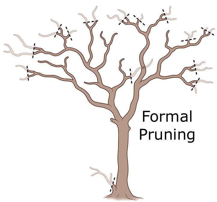 Pruning Crepe Myrtle Trees Crepe Myrtle Landscaping Pruning Crepe Myrtles Myrtle Tree