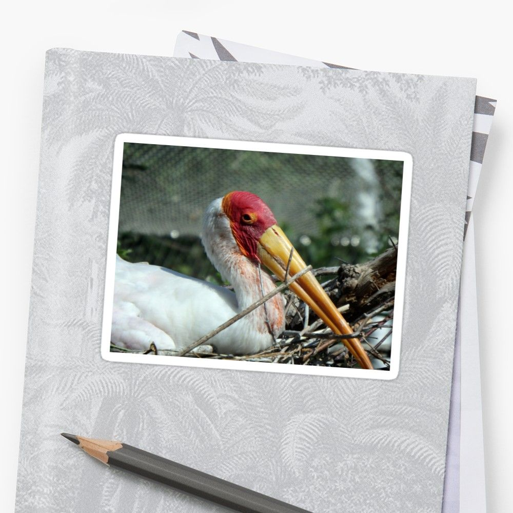 Yellow-billed stork (Mycteria ibis)\' Sticker by Danler | Framed ...