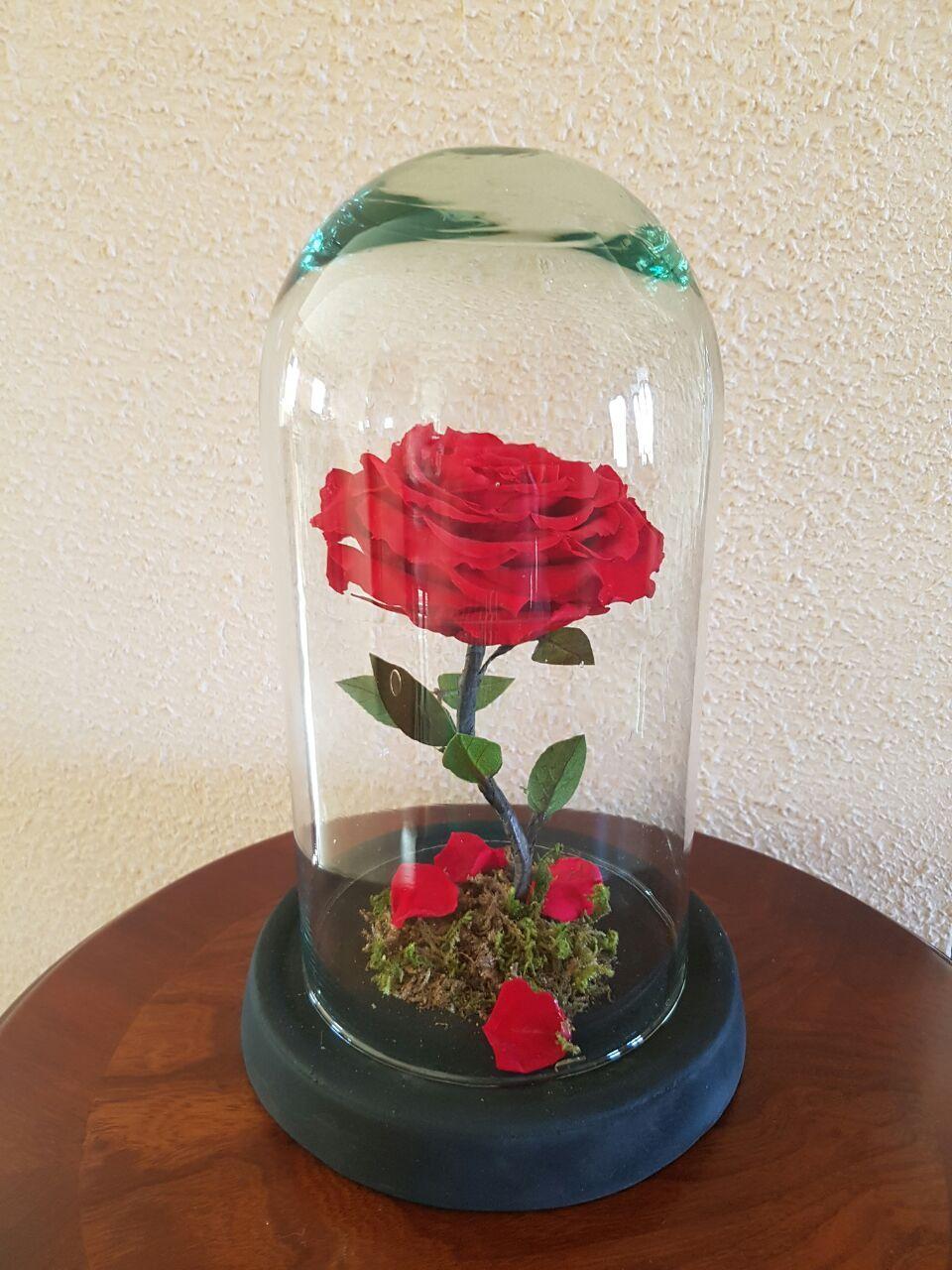Reglale A Tu Bella Una Rosa Natural Eterna De La Bella Y La Bestia