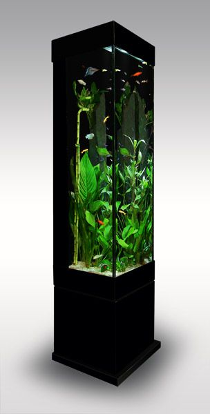 aquarium colonne aquarium pinterest aquarium colonne aquarium et photos. Black Bedroom Furniture Sets. Home Design Ideas