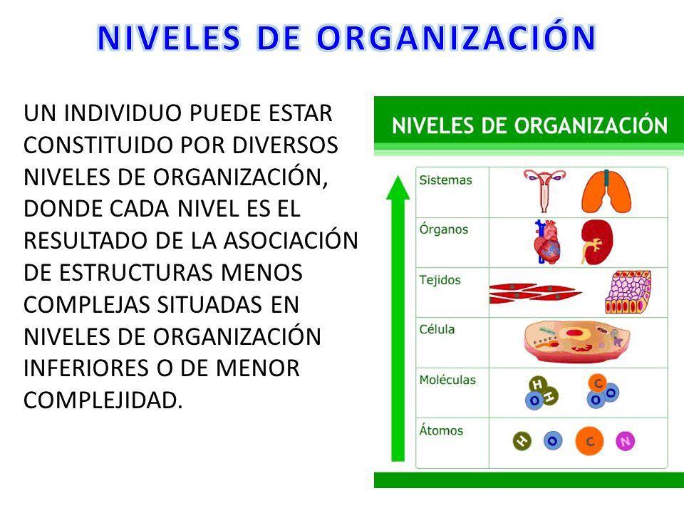 Imagenes De Los Niveles De Organizacion De Los Seres Vivos Para Colorear Búsqueda De Google Personal Care Map Person