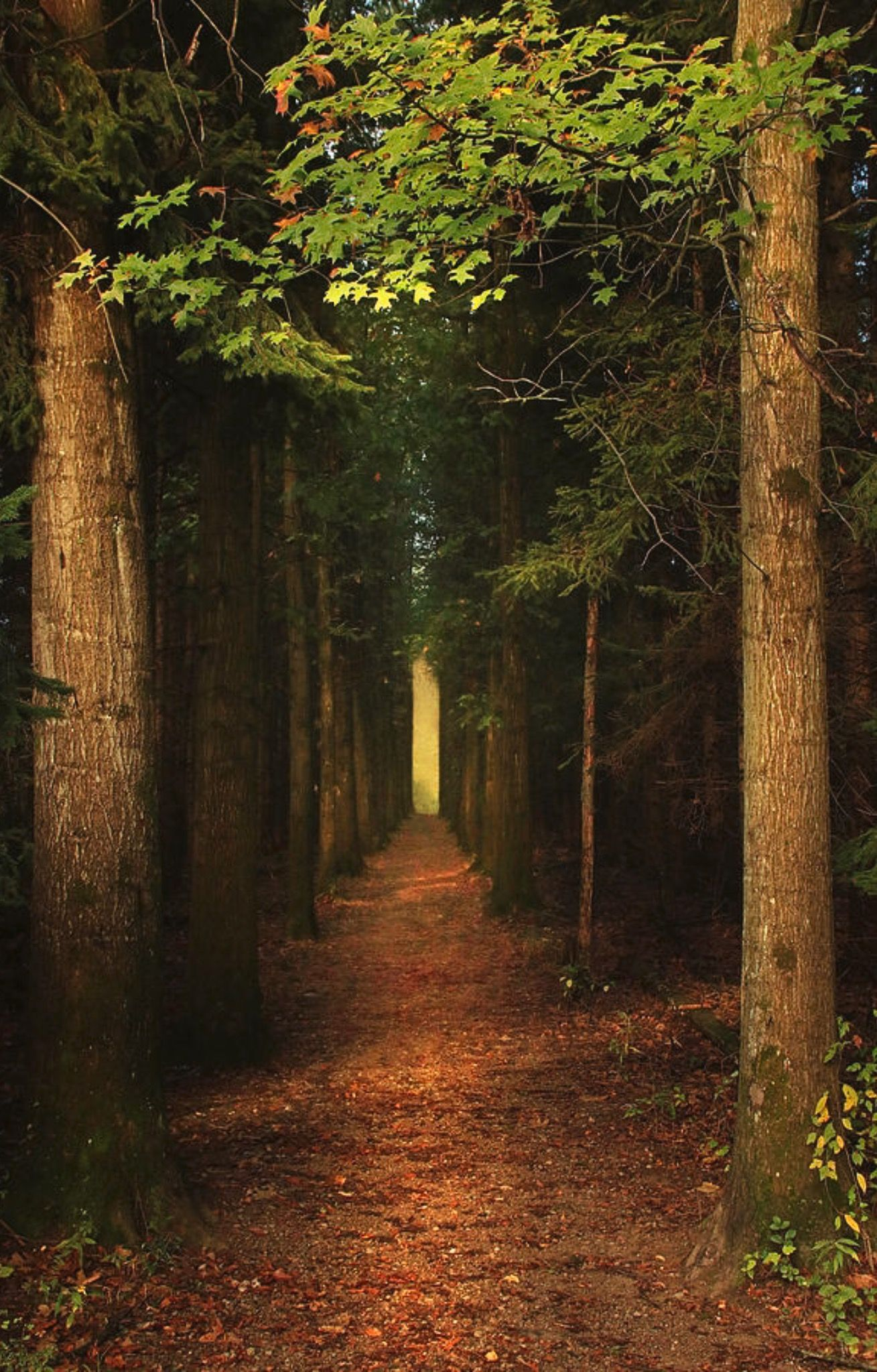 The Pathway is a photograph by Rob Blair. The beautiful ...