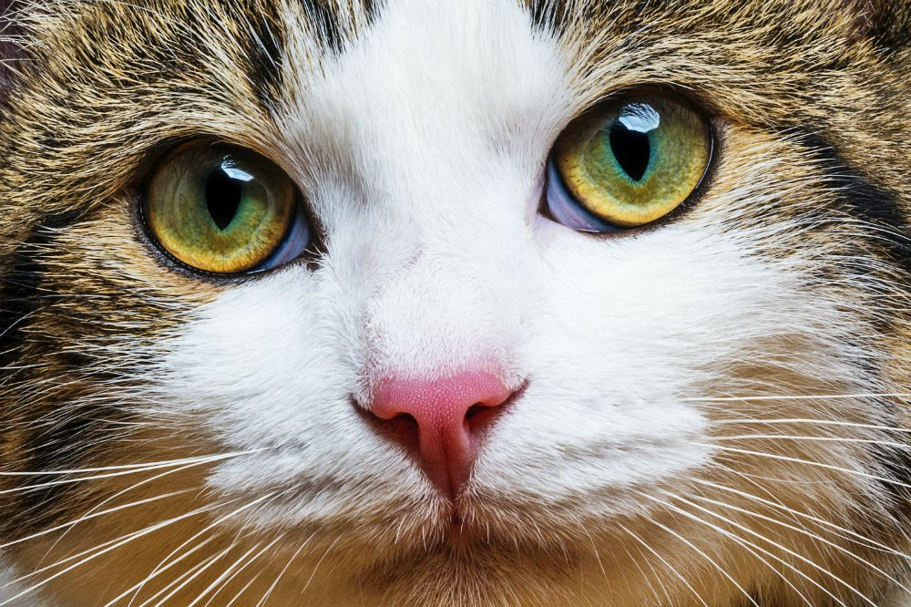 37 Amazingly Beautiful Cats To See Cat photography, Cat