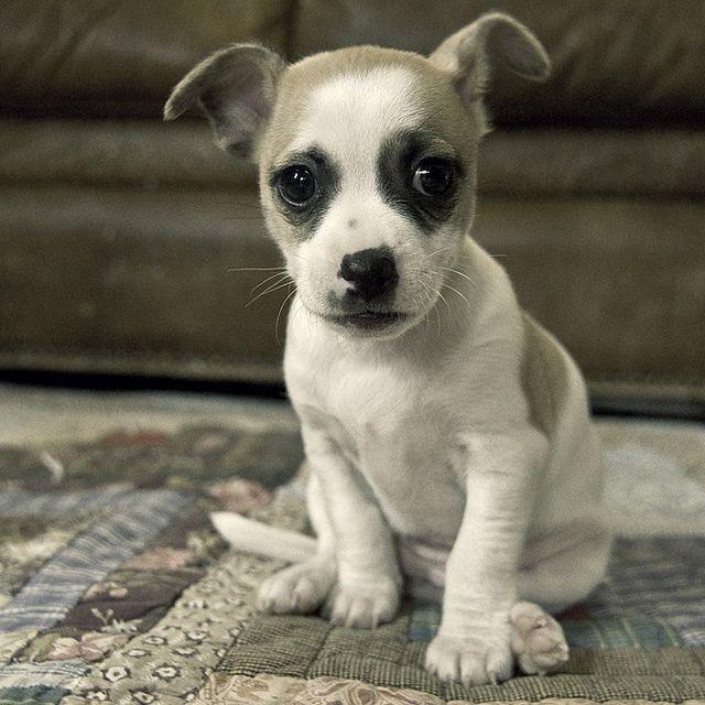 new #puppy