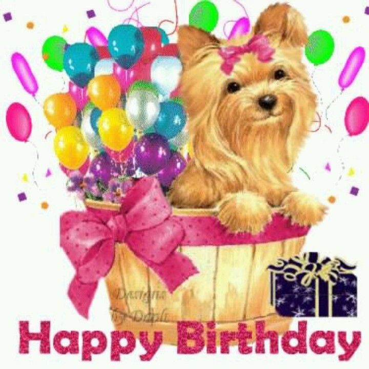 Birthday Yorkie Happy Birthday Greetings Happy Birthday Pictures Happy Birthday Images
