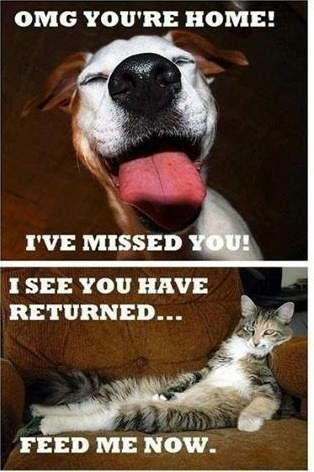 Cats Vs. Dogs hahaha