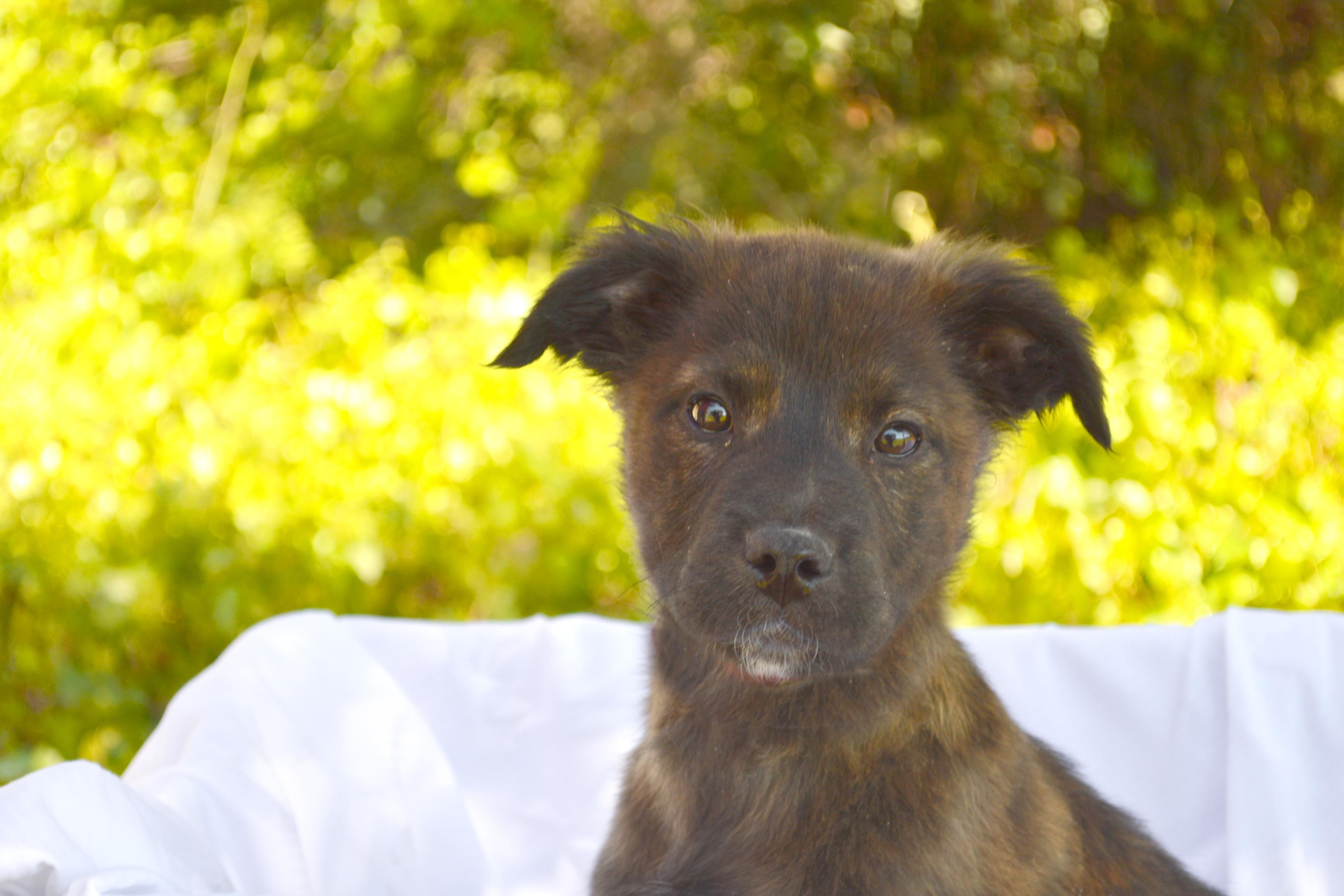 Adopt Zippo On Black Labrador Retriever Labrador Retriever