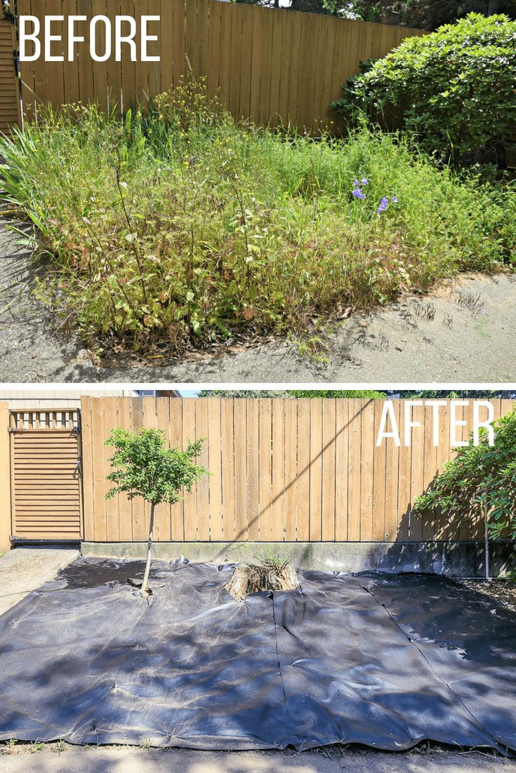 How to Revive an Overgrown Garden | Clean slate and Slate