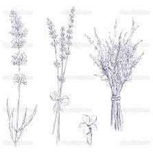 Lavender Illustration Lavender Tattoo Pencil Drawings Drawings