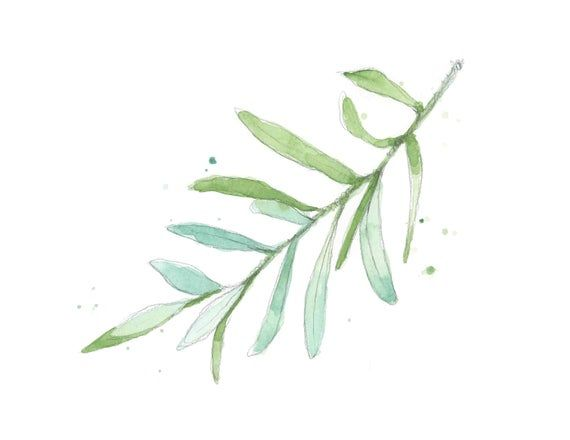, Olive Branch #4 Watercolor Art Print for Baby Nursery – Farmhouse Art Print – Botanical Wall Decor, My Babies Blog 2020, My Babies Blog 2020