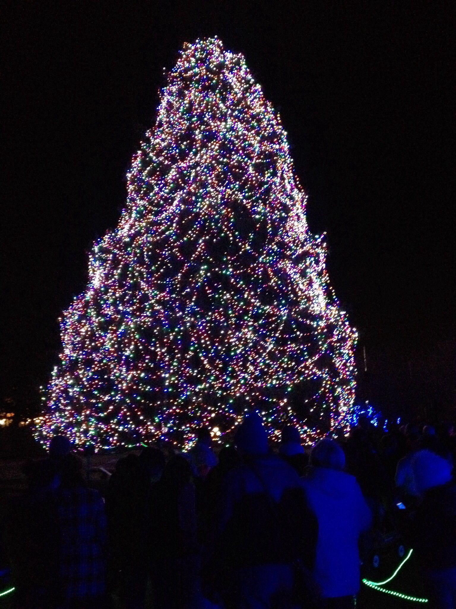 the lights before christmas toledo zoo toledo oh - Toledo Zoo Lights Before Christmas