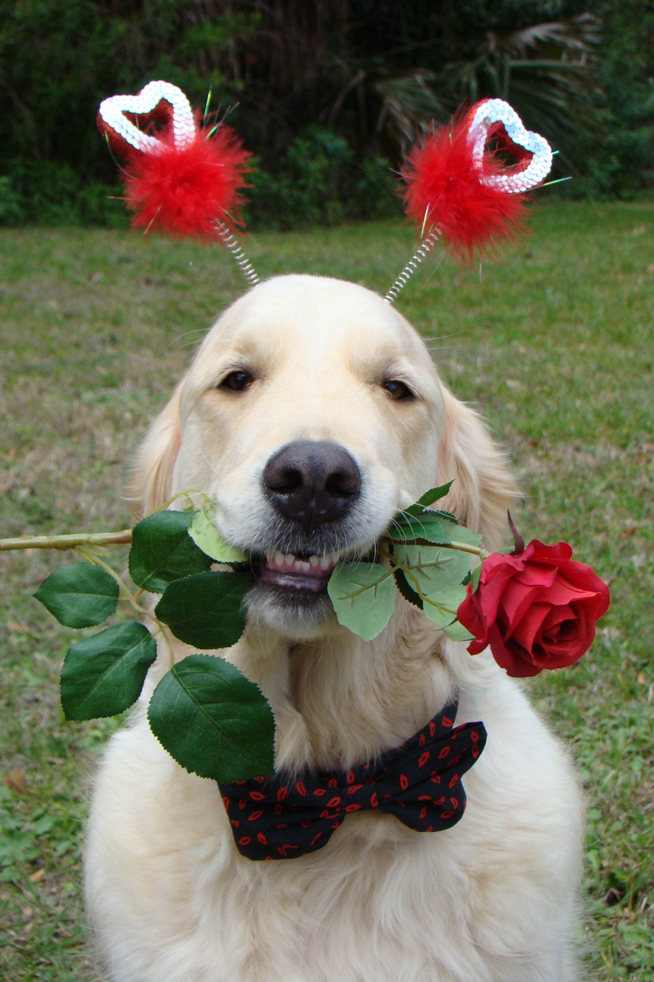 Bentley with a Rose for his Sweetheart Perros con flores