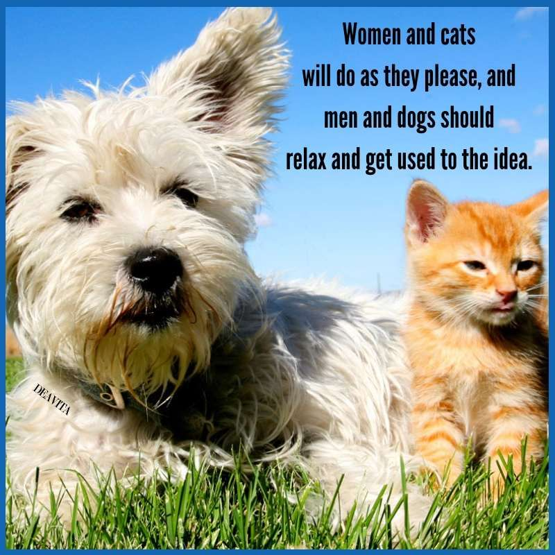 Women And Cats Men And Dogs Funny Quotes With Photos Cats Dogs Funny Pets Quotes Cats Cat Vs Dog Dog Quotes