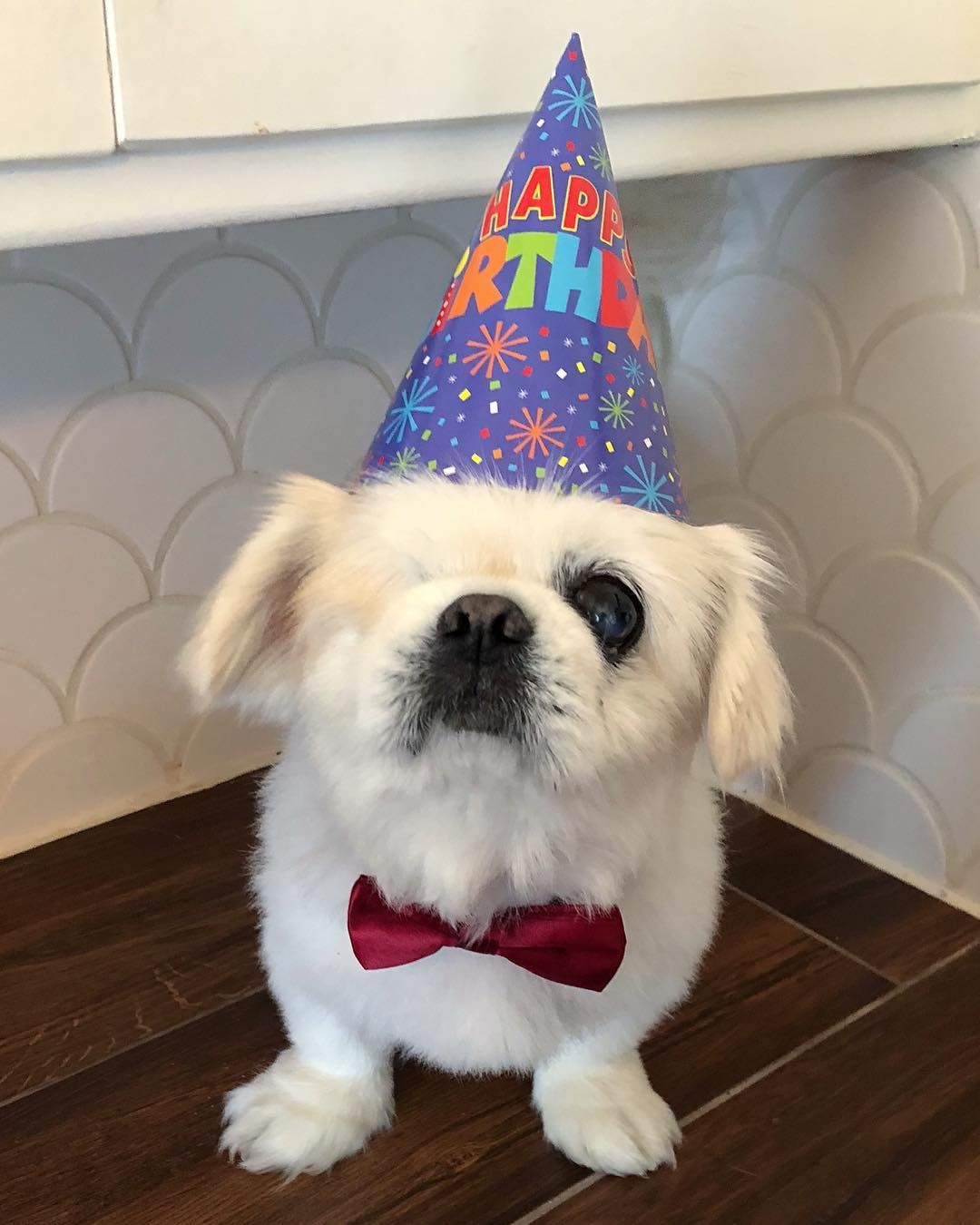 Happy birthday to me!!! . . . . Dog gifts, Pekingese