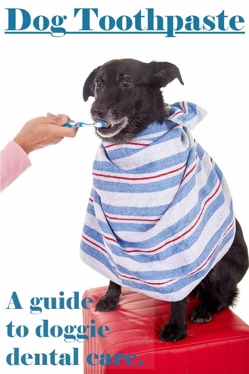 Best dog toothpaste dog toothpaste puppy care dog