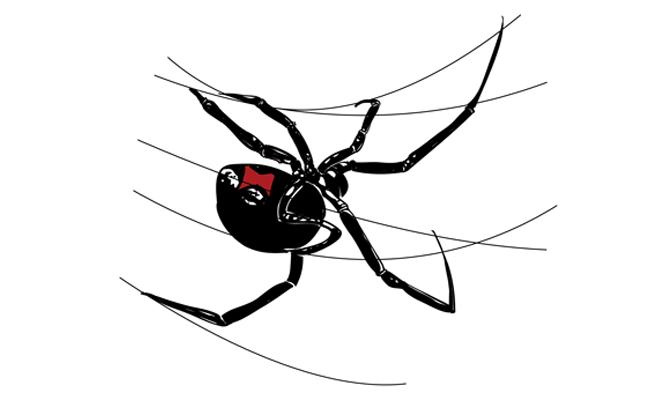 How To Draw A Black Widow Spider Sketchbook Challenge 21